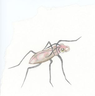 Cartoon beetle for children's book. Hmm, not sure if cute, but not scary either right? Hopefully?