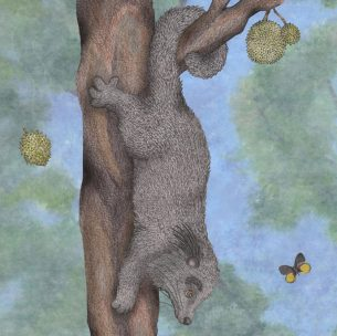 Pencil work of a binturong or bearcat, from children's book. Can we have these as pets?!