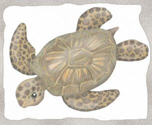 Young green sea turtle drawing. My spirit animal : )