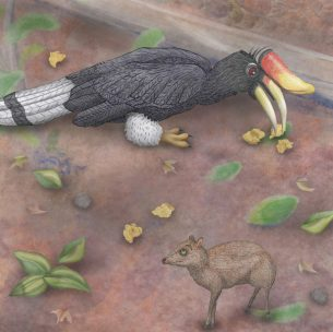 Rhinoceros hornbill illustrated with pencils for children's book