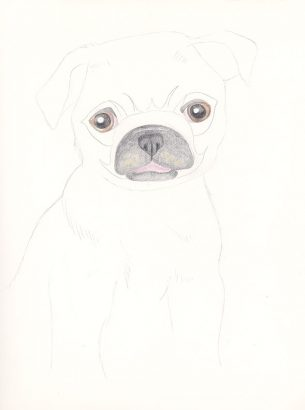 Cute lil' pug sketched with colored pencils.